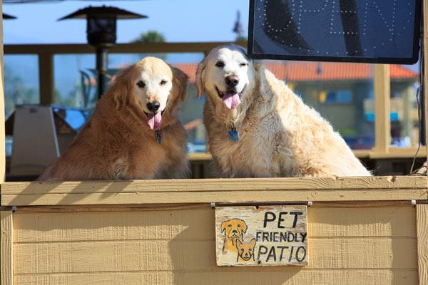 Pet Friendly Ventura Harbor Village California S
