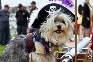 Pirate_Dog