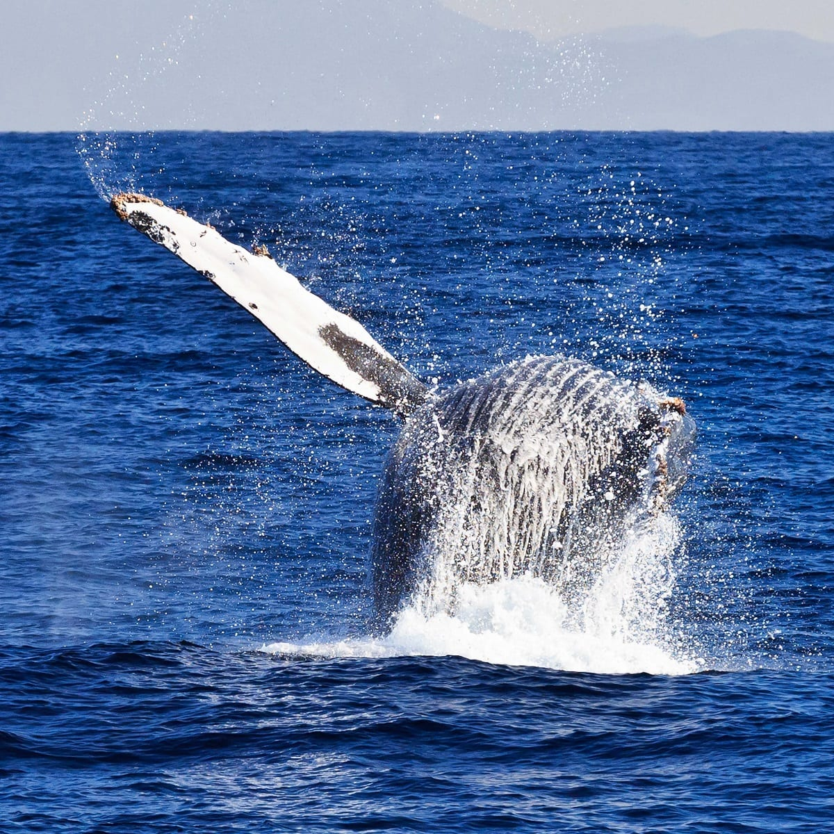 Whale Watching with Island Packers