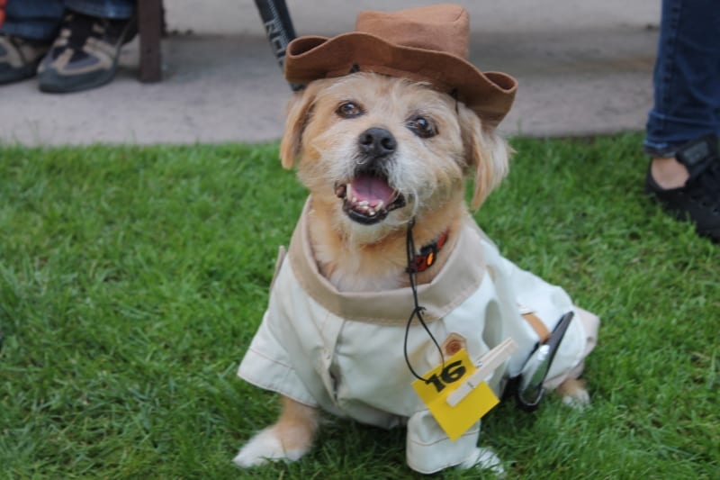 howl-o-ween-trick-or-treat-2015-016-copy-copy-800x533