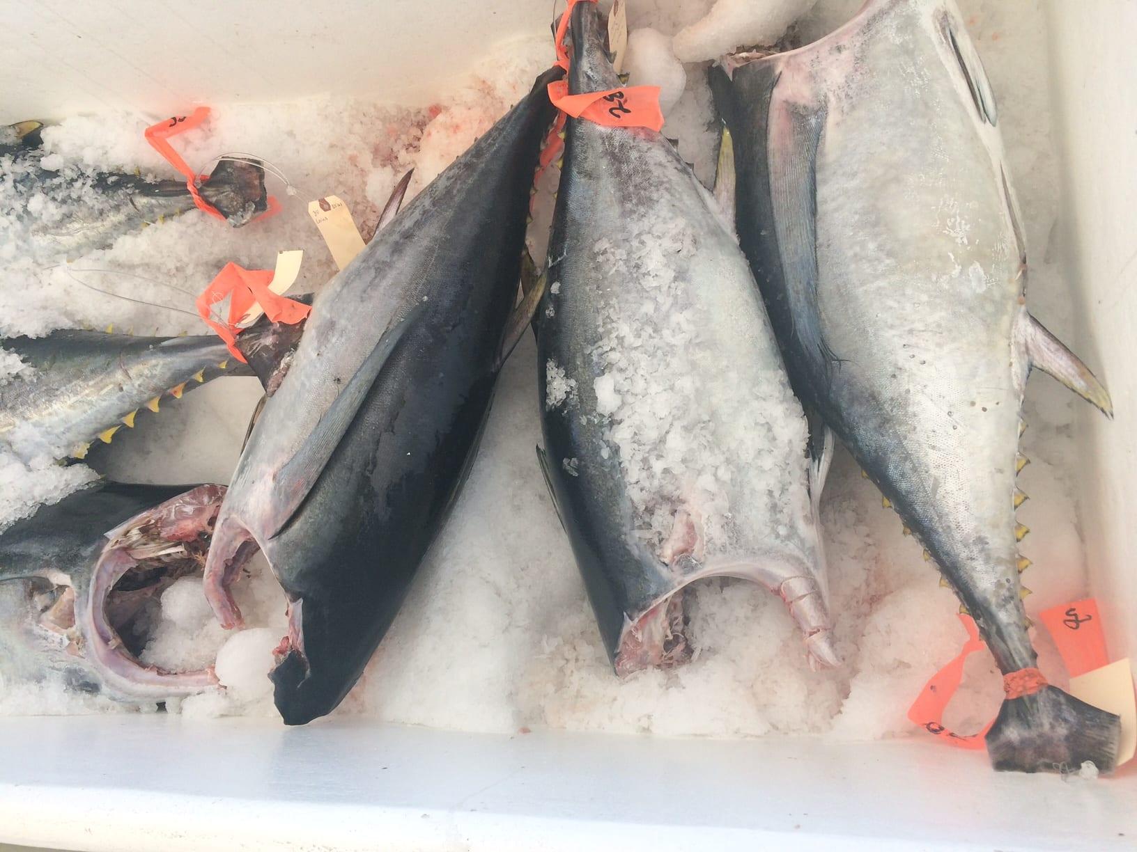 Fish Market Tuna Sale