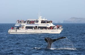 island packers going whale watching