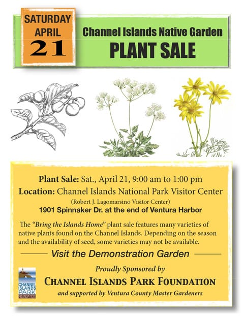 bring the island home with you with our channel island plant sale