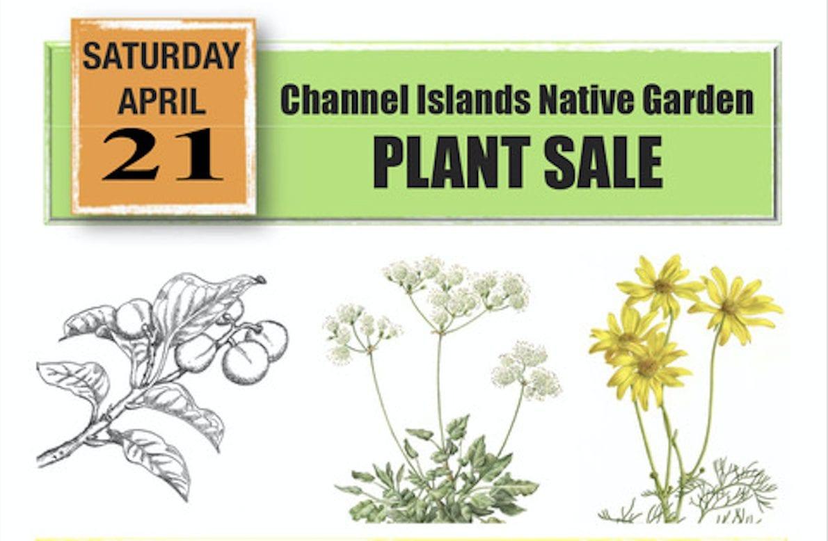 Channel Islands plants sale