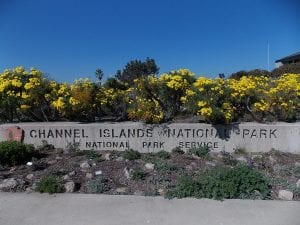Channel Islands National Park Visitor Center welcoming sign surrounded by wild flowers native to the Channel Islands themselves