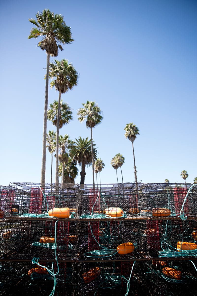 Lobster season begins in Ventura Harbor!