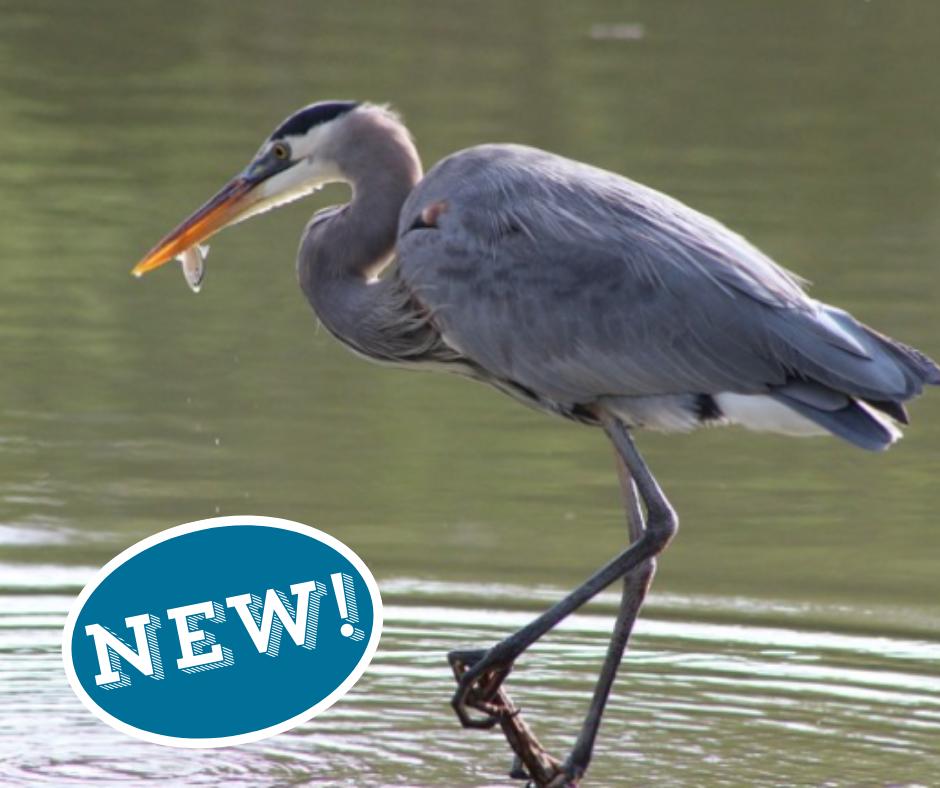 Natural History sail new this year!