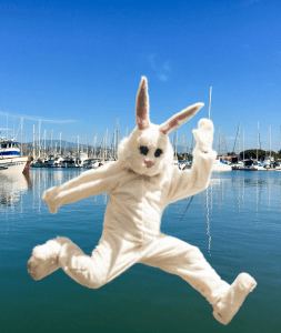 Bunny jumping with harbor blue marina in background