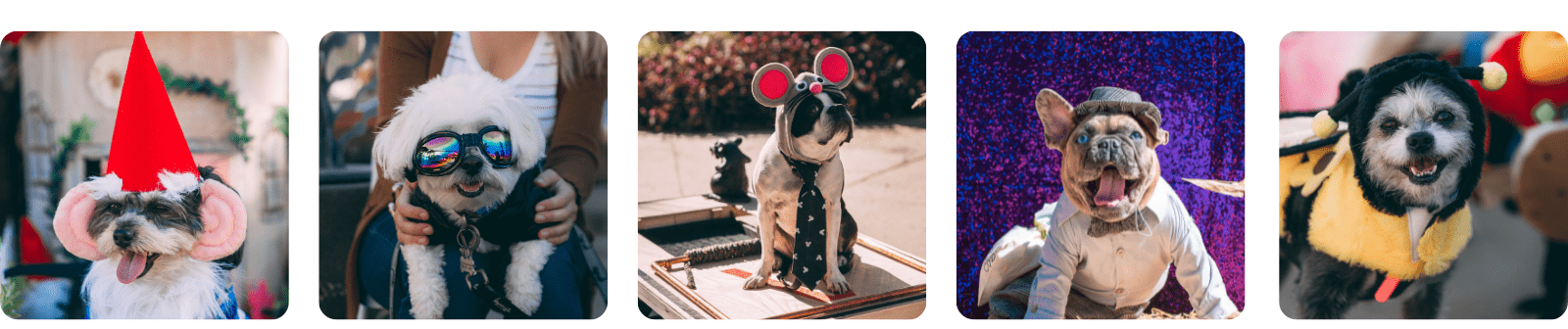a variety of dogs in costumes