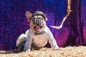 costumed dog in front of purple sparkle backdrop